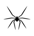 black spider isolated on white background vector image vector image