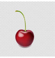 cherry isolated transparent background vector image vector image