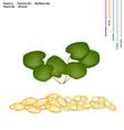 Gotu Kola with Vitamin A B1 B2 and B6 vector image vector image