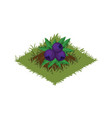 isometric cartoon fruit garden bed with berry vector image vector image