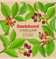 sandalwood frame vector image vector image