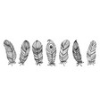 set black and white feathers collection floral vector image