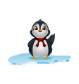 cute penguins on ice floe vector image