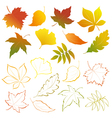 Falling leaves set vector image
