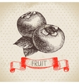 Hand drawn sketch fruit persimmon Eco food vector image vector image