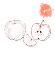 whole apple half and slice of apple on a white vector image vector image