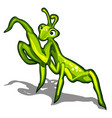 beetle praying mantis isolated on a white vector image vector image