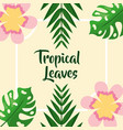 flower ornament palm foliage tropical leaves vector image