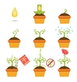 Planting The Seed Step By step Istruction vector image vector image