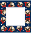 pug dog with red scarf on navy blue banner card vector image vector image