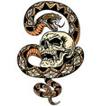 snake coiled round skull vector image vector image