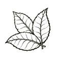 three leaves tea or mint vector image vector image