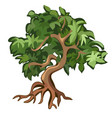 deciduous tree with exposed roots isolated on vector image vector image