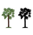 palm tree and grass vector image