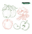 pieces of apples and two apples on a branch the vector image vector image