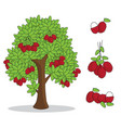 rambutan on tree with white background vector image vector image
