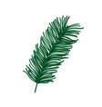 branch pine tree foliage nature icon design vector image vector image