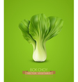 Pok Choy isolated on green background vector image vector image