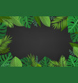 summer season composition with green tropical vector image