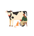 woman farmer sitting on chair and milking cow vector image vector image