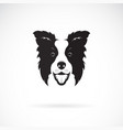 a border collie dog on white background pet vector image vector image
