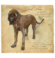Great Dane German Mastiff - An hand drawn vector image