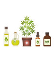 marijuana plant and cannabis oil medical vector image