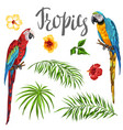 set of tropical plants and parrots vector image vector image