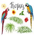 set tropical plants and parrots vector image