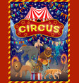 animals acrobat and strongman on circus arena vector image vector image