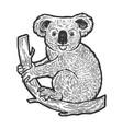 koala bear on tree sketch engraving vector image vector image