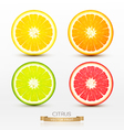 slices of orange grapefruit lime lemon vector image vector image