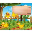 Garden scene with four ducks and sign vector image vector image