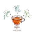 Herbal Tea Sketch Recipe vector image vector image