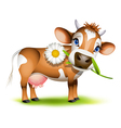 Little Jersey cow vector image