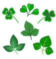 set of various green trefoil leaves isolated vector image