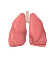 structure of the human lungs concept of vector image vector image