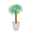 A Palm Tree in Flower Pot vector image vector image