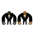 gorilla bouncer big strong animal guard monkey in vector image vector image