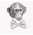 Sketch monkey face with bow tie Hand drawn doodle vector image vector image