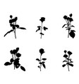 set of beautiful silane white and black roses vector image vector image