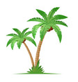 two coconut palm trees with grass vector image