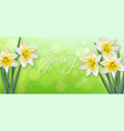 daffodil spring flowers realistic delicate vector image vector image