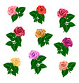 garden rose flowers of different colors to vector image