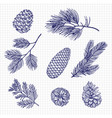 hand sketched fir tree branches and cones vector image