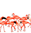 seamless border with flamingo tropical bright vector image
