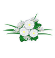 bouquet of chamomiles and daisies vector image