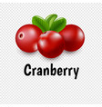 granberry set with transparent background vector image