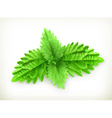 Mint leaf vector image vector image