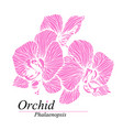 orchid flowers phalaenopsis blossom vector image vector image